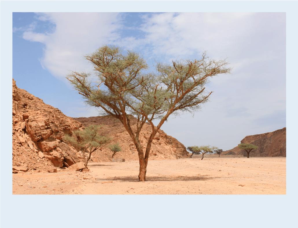Travelcar plante des arbres pour compenser son co2 et for Plante un arbre