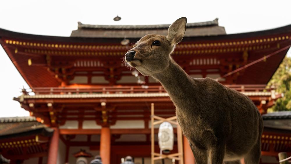 Nara_Japon